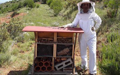 ¿Quieres venir a ver nuestro Bee Hotel de Insectos en Serra Calderona?